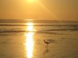 Costa Rica: PlayaDominical