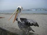 Peru: Islas Ballestas