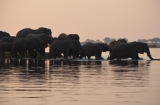 Botswana: Chobe National Park