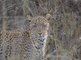 Tanzania: Serengeti NationalPark