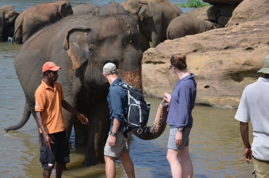 Sri Lankan Elephant Orphanage