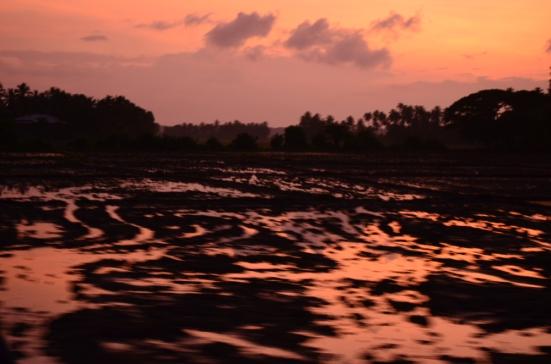 Sunrise from Yala