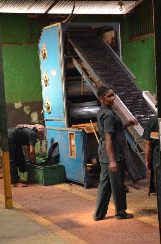 Tea Factory - No Shoes Allowed