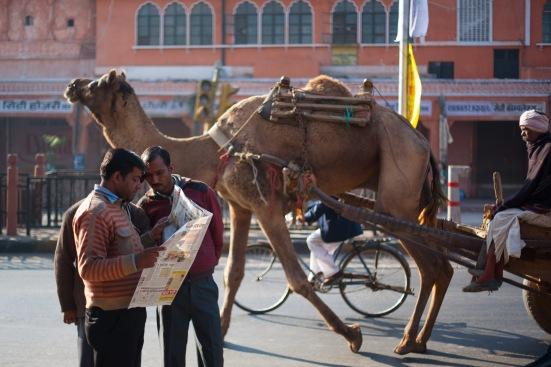 EZH Camel Crossing