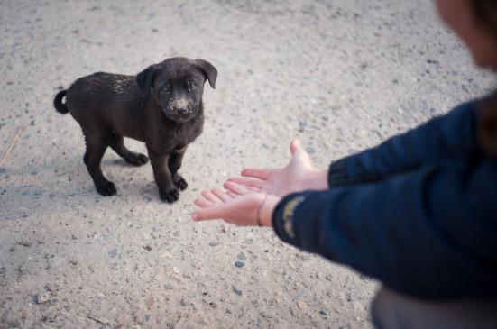 EZH Puppy Heaven