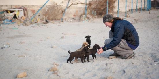 EZH Many Puppies