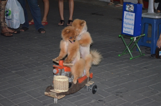Entertaining Dogs